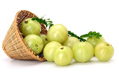 Amla fruit extract Manufacturer,Phyllanthus emblica,China Supplier