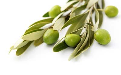 Olive leaf extracts manufacturer,Olea europaea L,Oleuropein,US Stock