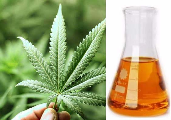 Cannabidiol Oil Manufacturers Wholesaler | Private Label CBD Oil