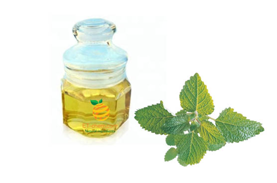Lemon balm oil manufacturer,Melissa essential oil supplier-ETChem